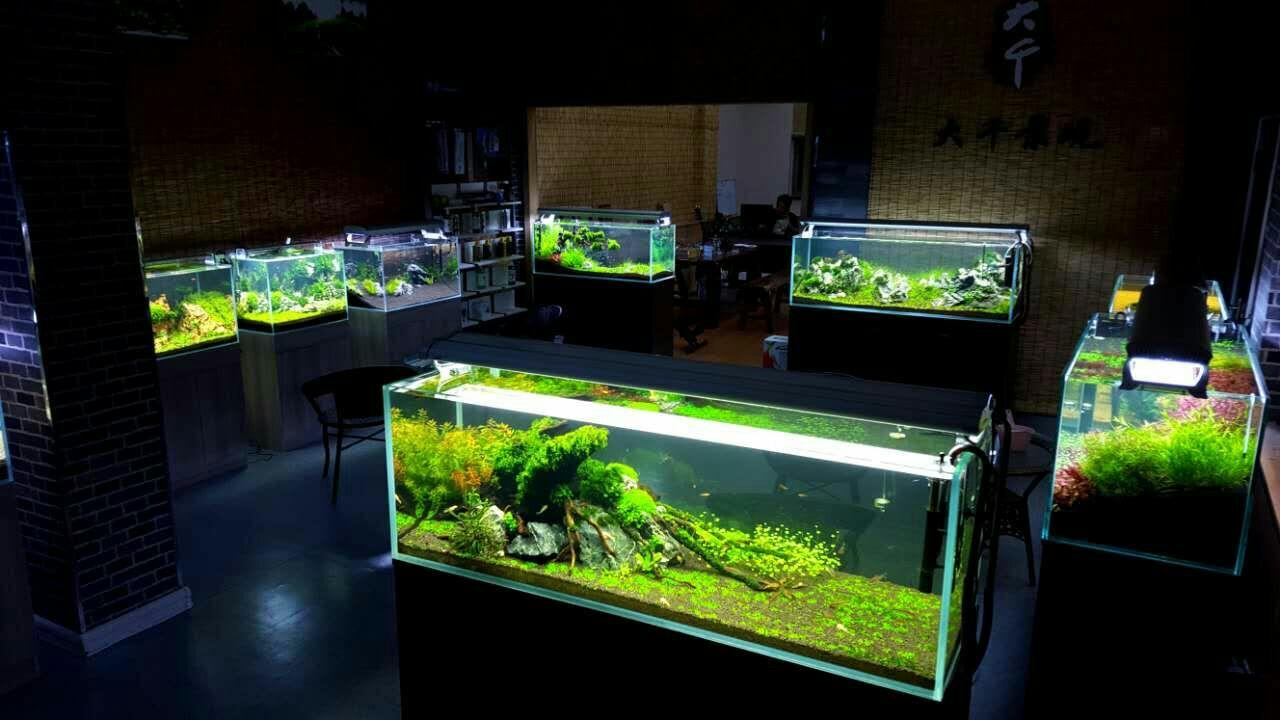 水族箱鱼缸和水草缸有哪些区别